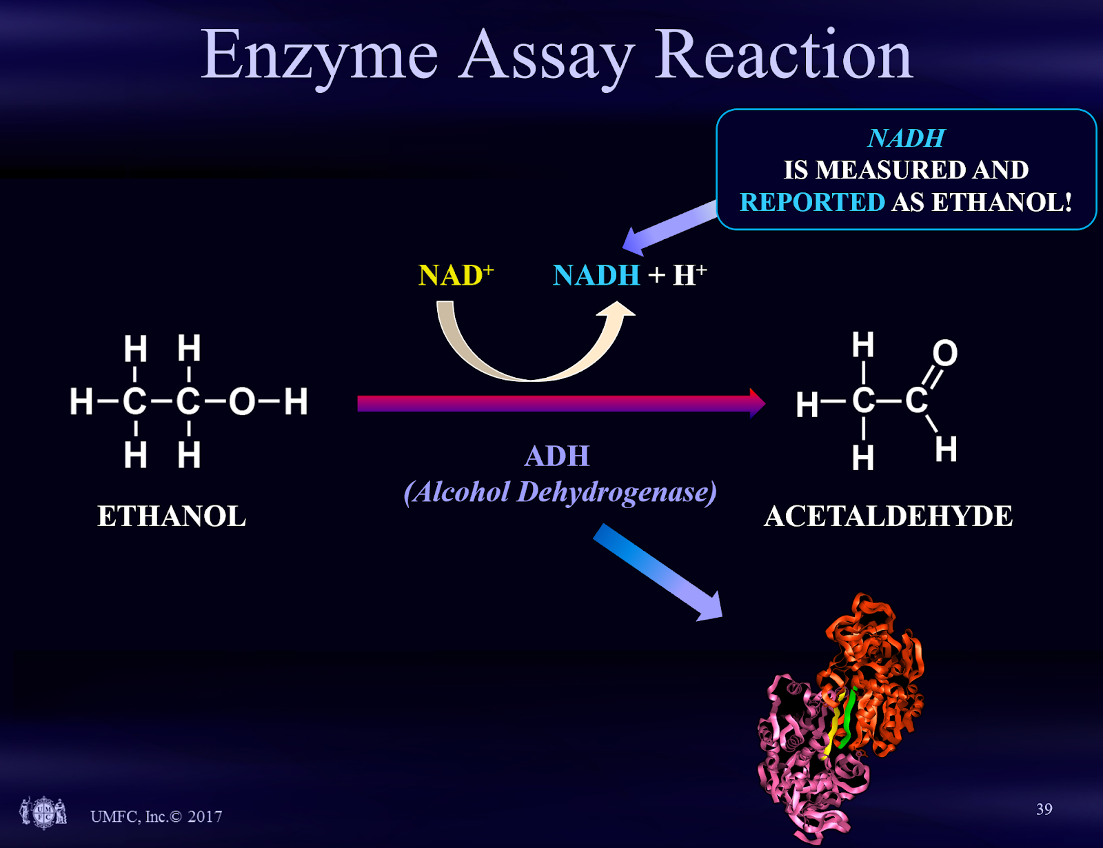 enzyme assay reaction
