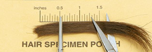 hair specimen